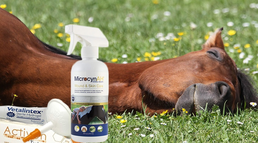 Wound Cream for Horses